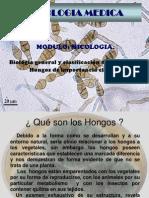 HONGOS CLASIFICACION