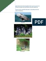 100 Species Terancam Punah Di Dunia Dan Memperingatkan Bahwa Species