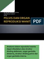 Kuliah Pelvis Dan Organ Reproduksi Wanita