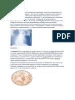 Tuberculosis, Hepatitis b Etc