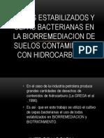 Lodos Estabilizados y Cepas Bacterianas en La Biorremediacion de Suelos Contaminados Con Hidrocarburos