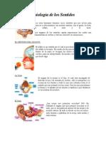 Fisiologias Del Cuerpo Humano