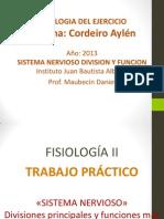 CORDEIRO_3º_B_-Sistema_nervioso