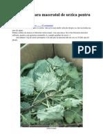 Cum Se Prepara Maceratul de Urzica Pentru Plante