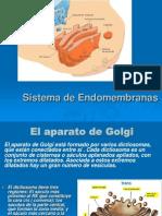 BIO 141 Clase 14 Sistema Endomembranas II