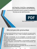 Biotec. Animal-tecnicas de Obtencion