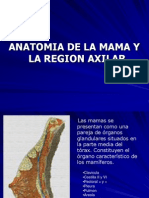 anatomia-de-la-mama-y-la-axila-1233461298962425-1