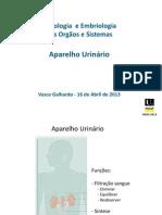 Aparelho Urinario - 2013