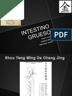 Presentacion de Intestino Grueso