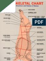 Beef Skeletal Chart