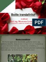 bolile_trandafirului