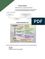 EMBRIOLOGIA resumen.docx