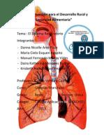 El Sistema Respiratorio Terminado