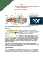Rol de las membranas biológicas importancia de los receptores  y de las señales intracelulares para el crecimiento y proliferación celular.docx