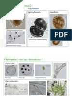 Algas Microscopicas