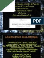 Gatto Conlangioepatite