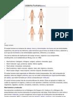 Los Componentes Del Sistema Humano