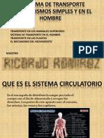 SISTEMA CIRCULATORIO EN LOS ORG Y HOMBRE.pptx