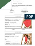 Aula de Anatomia - Sistema Muscular - Tórax