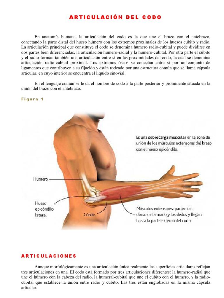 Excepcional Hechos De Húmero Ornamento - Anatomía de Las Imágenesdel ...