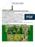 Planta Auyenta Perros