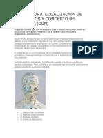 ACUPUNTURA  LOCALIZACIÓN DE LOS PUNTOS Y CONCEPTO DE DISTANCIA
