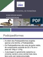 Podicipediformes