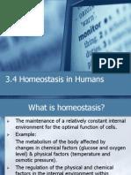 3.4 Homeostasis In Human