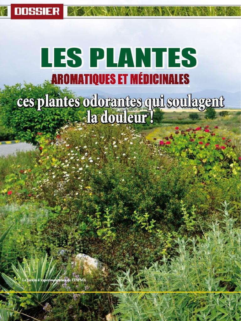 Plantes aromatiques bonnin monique abebooks la m decine for Plantes par internet