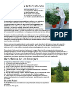 Beneficios de la Reforestación