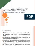 PRODUCCIÓN DE PIGMENTOS POR CALLOS DE Mammillaria candida