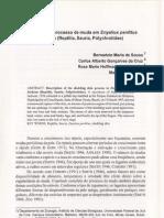 Descrição do processo de muda em Enyalius perditus