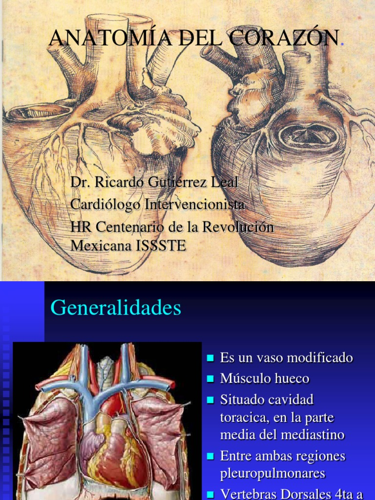 Anatomc3ada de Corazc3b3n 180412 1