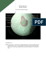 [Bi 160.1] Neural Tube Labels.docx