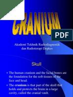 Cranium (2)