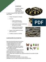 CLASIFICACIÓN DE LOS REPTILES