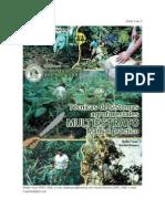 Agroforestal_multiestrato