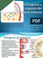 1 Ontogenia y Organos Del SI Pre-grado 2010