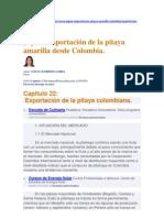Japón_Importación de la pitaya amarilla desde Colombia