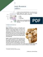 Neuroanatomia Resumen Tronco Encefalico - Cristhián Jerez y Marcelo Ortega