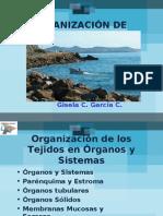 ORGANIZACIÓN DE ÓRGANOS 09