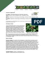Brazilian Peppertree 2002