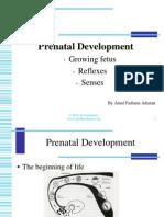 Prenatal Development CHILD