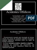 Acidentes Ofídicosfinal