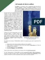 Teoría del mundo de hierro sulfuro