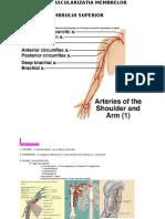 Vascularizatia Membrelor - Varianta Prelucrata