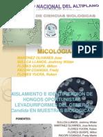 Mico Clinica Levadurasc
