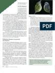 Endocrine disruptors can perturb development