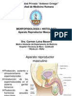 Aparato Reproductor Masculino Histo