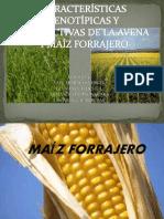CARACTERÍSTICAS FENOTÍPICAS Y PRODUCTIVAS DE LA AVENA Y